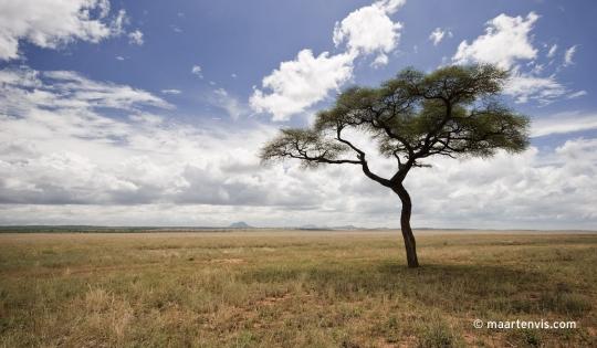 20081130 3738 540x315 - Tarangire National Park