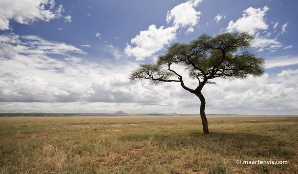 20081130 3738 610x356 - Tarangire National Park