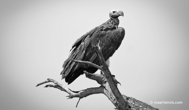 20081130 3885 610x356 - Birds of Tanzania
