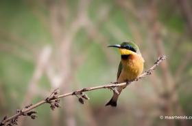 20081202 5093 280x185 - Birds of Tanzania