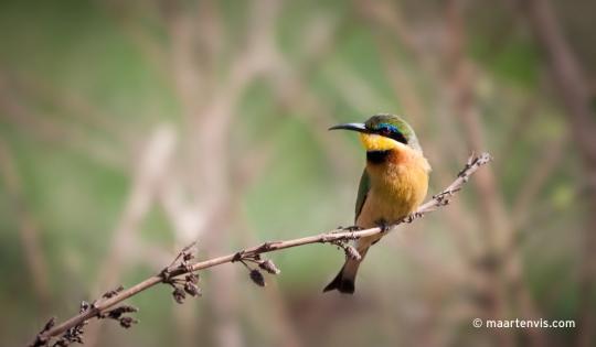 Birds of Tanzania Tanzania