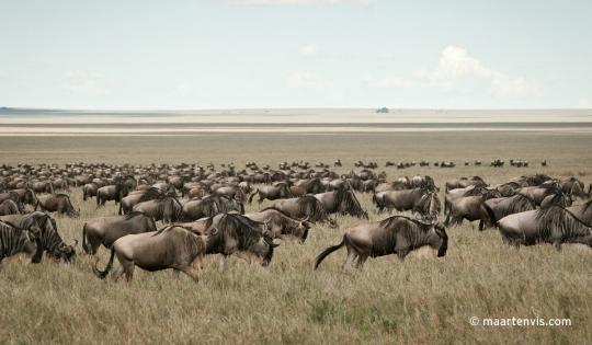 The Great Escape Tanzania