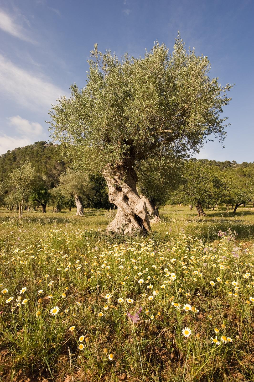 20110430 6357 - Mallorca in Spring