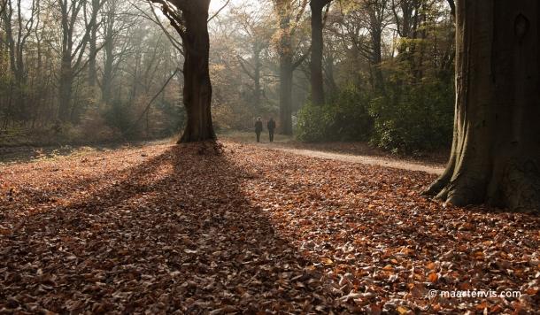 20111112 6483 610x356 - Autumn leaves