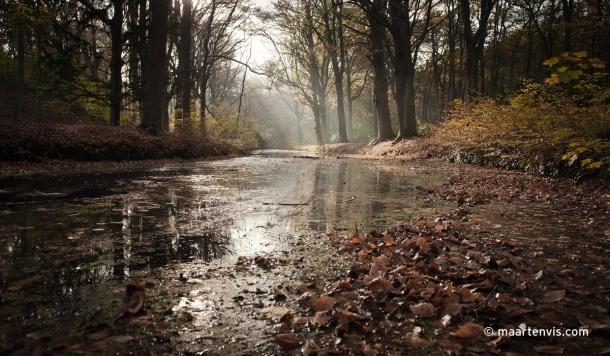 20111112 6492 610x356 - Autumn leaves