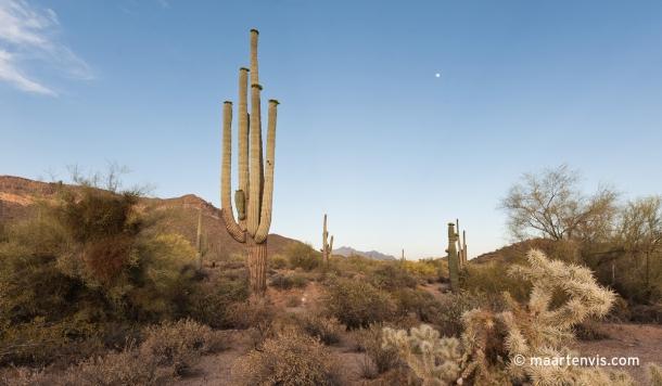 20120502 67892 610x356 - In the Arizona Desert