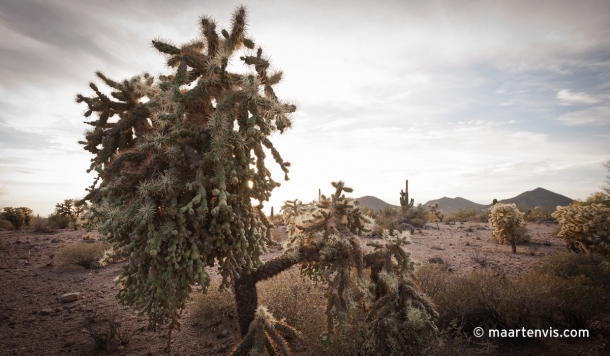 20120502 67942 610x356 - In the Arizona Desert