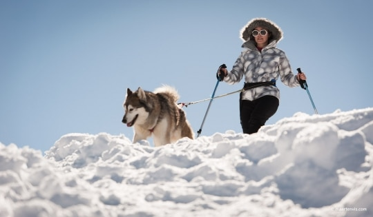 20130303 5461 540x315 - Husky Sleigh Riding in the Austrian Alps