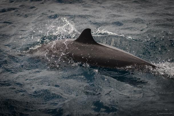 20130909 3107 610x407 - Snorkelling Near Klein Bonaire