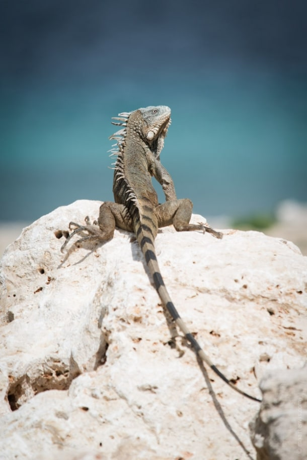 20130911 34551 610x913 - Bye Bye Bonaire