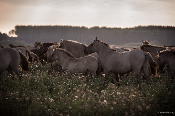 20130929 3793 610x407 - Wild Horses And The New Wilderness
