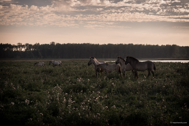 20130929 3846 610x407 - Wild Horses And The New Wilderness