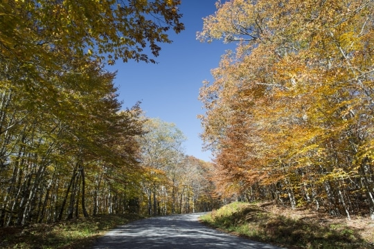 Camden Foliage in Autumn Maine United States