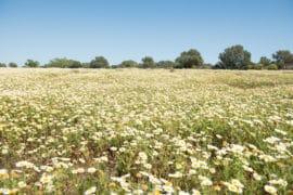 20140404 8404 1 270x180 - Mallorca in Spring