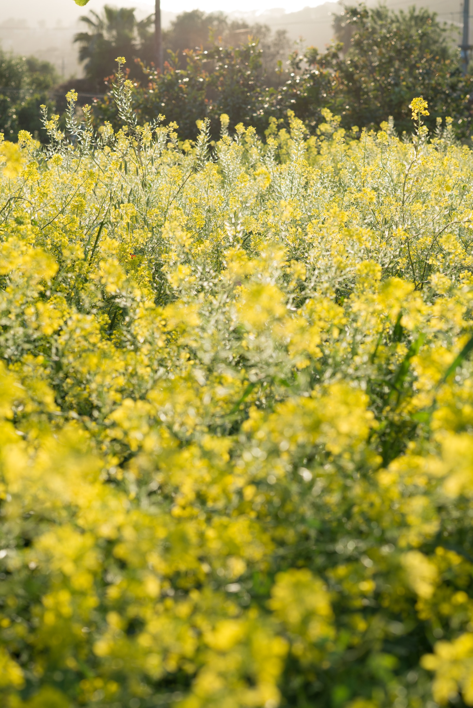 20140408 8721 - Mallorca in Spring
