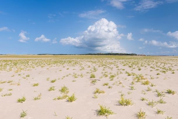 20140906 26201 610x407 - The Green Beach on Terschelling