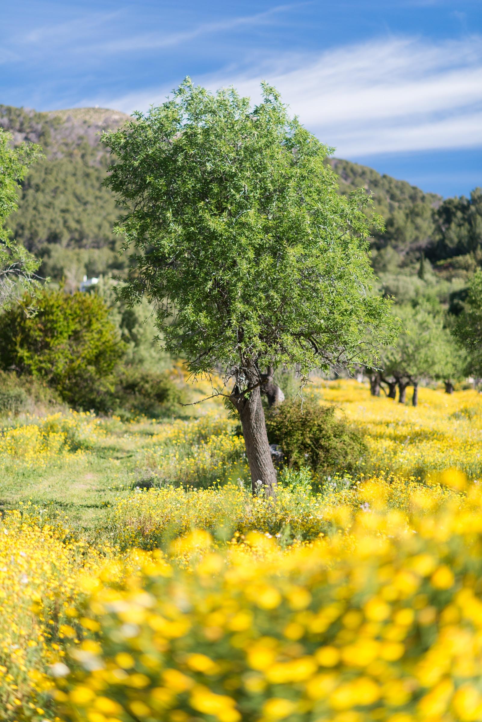 20150420 7548 - Mallorca in Spring