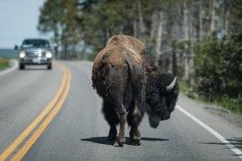 20150617 9934 270x180 - Visiting Yellowstone National Park