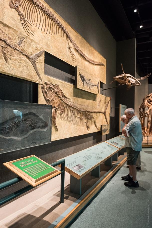 20150626 0901 610x914 - Denver Dinosaur Spotting