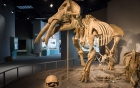 Denver Dinosaur Spotting Colorado United States