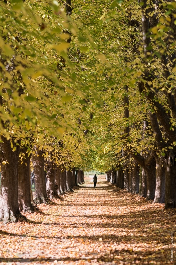 20151029 3953 610x915 - Autumn in Elswout