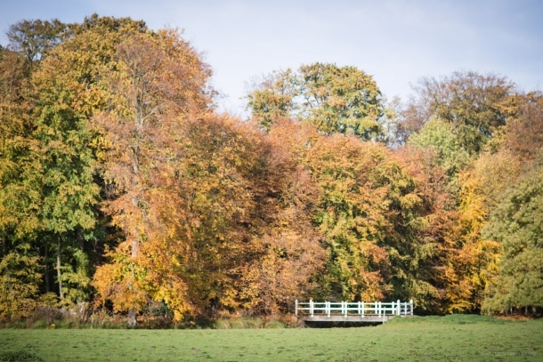 20151029 3957 610x407 - Autumn in Elswout