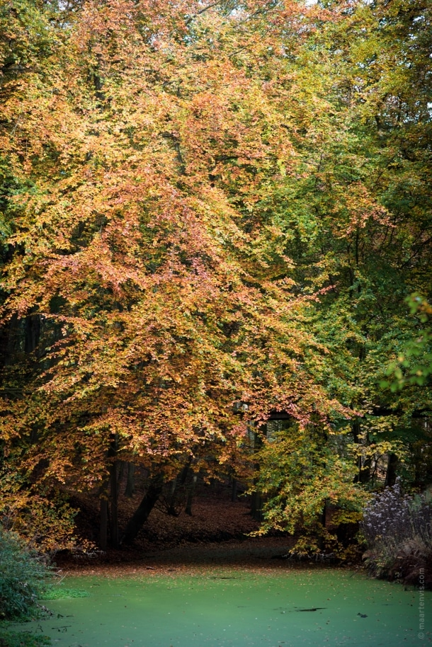 20151029 3975 610x914 - Autumn in Elswout