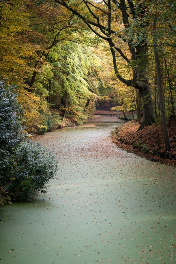 20151029 3976 610x914 - Autumn in Elswout