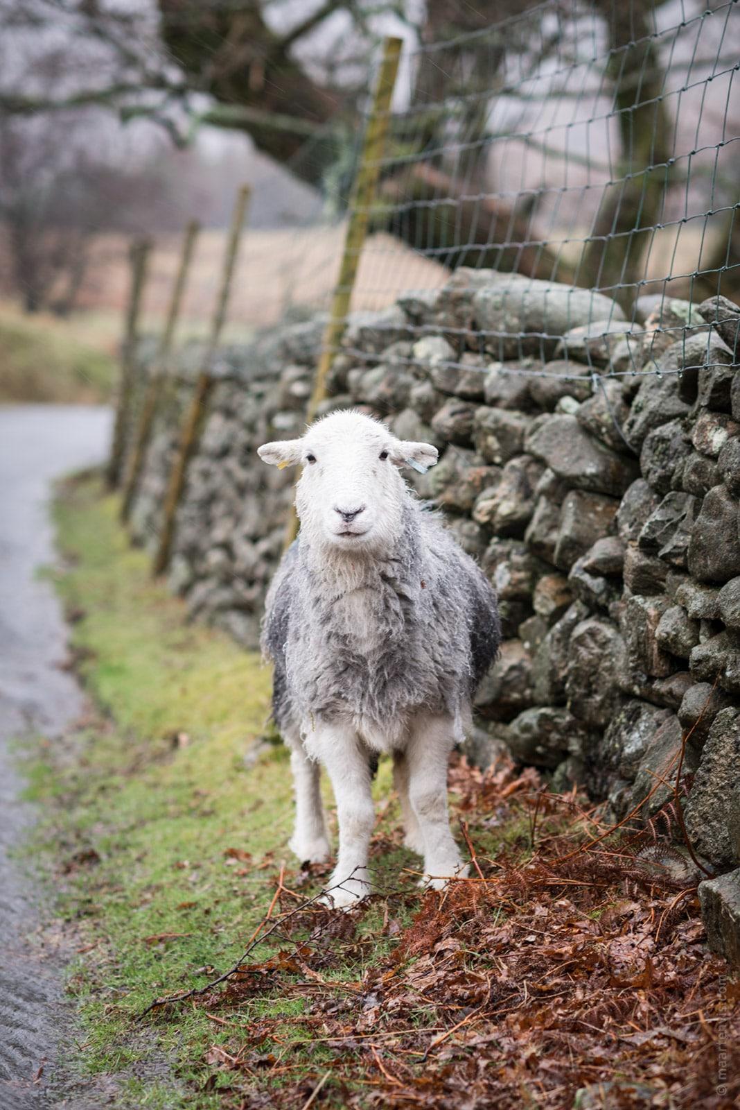 20160326 8547 - Lake District Impressions