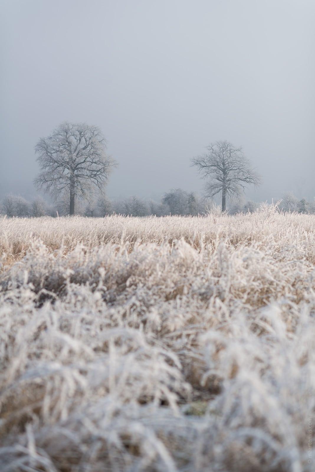 20161231 7292 - Winter in Limburg