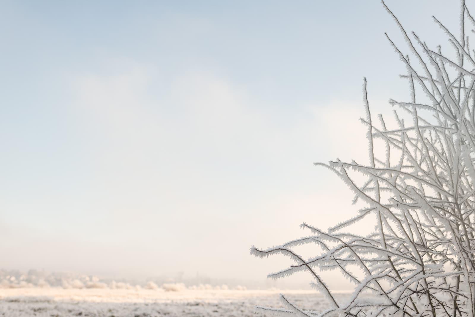 20161231 7319 - Winter in Limburg