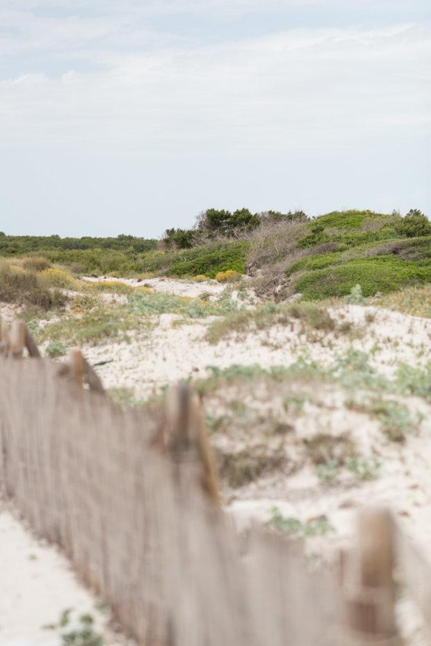 20170522 1986 620x929 - Es Trenc Beach