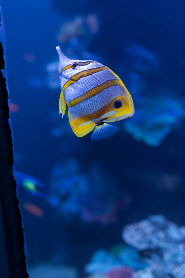 20170904 5314 Edit 620x929 - Palma Aquarium