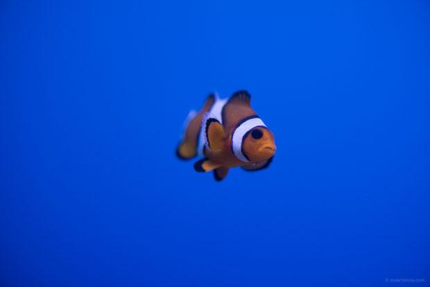 20170904 5356 620x414 - Palma Aquarium