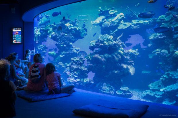 20170904 5371 1 620x414 - Palma Aquarium