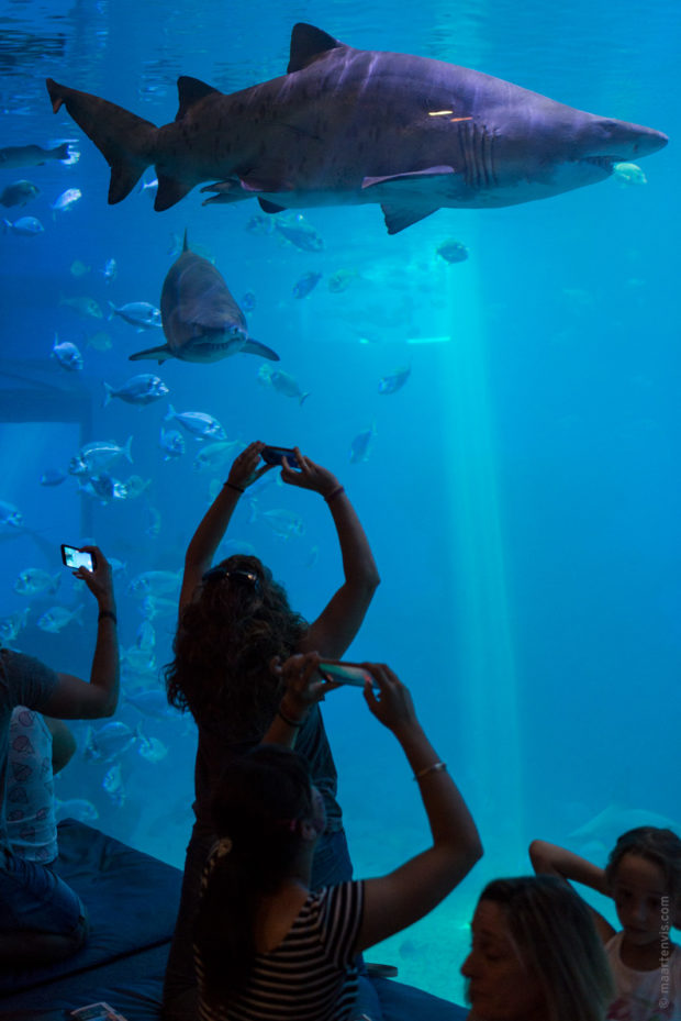 20170904 5621 620x929 - Palma Aquarium