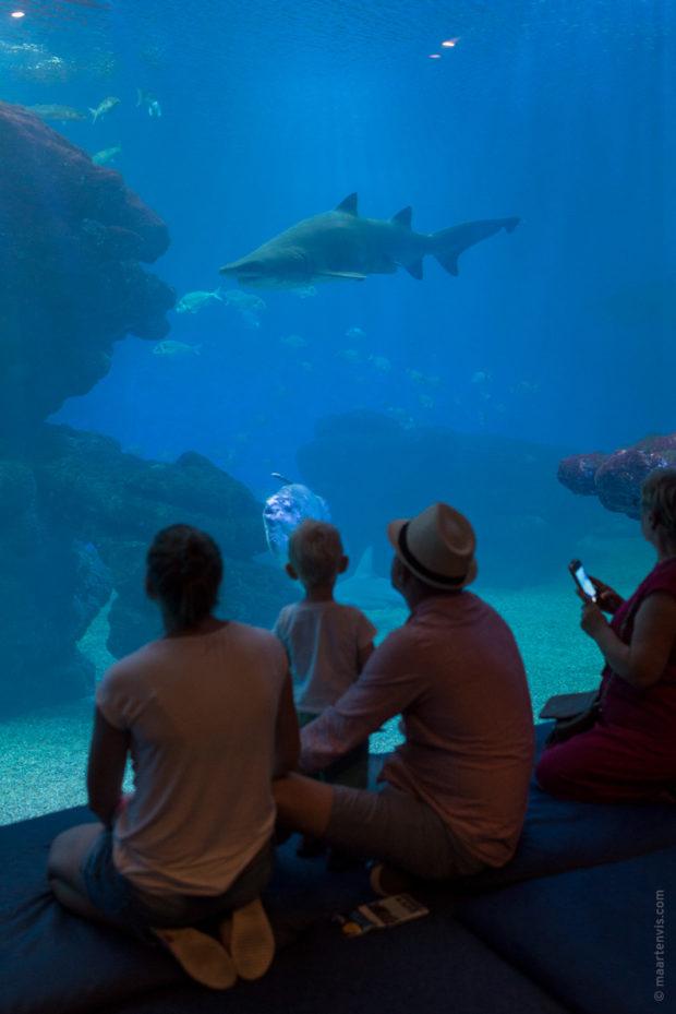 20170904 5631 620x929 - Palma Aquarium