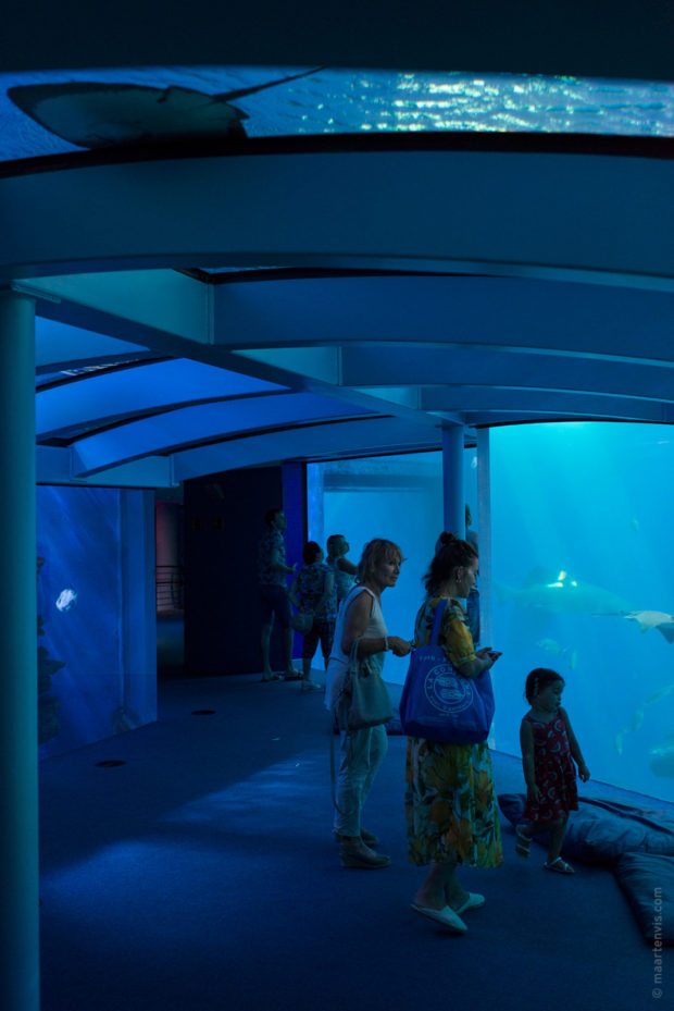 20170904 5635 620x929 - Palma Aquarium