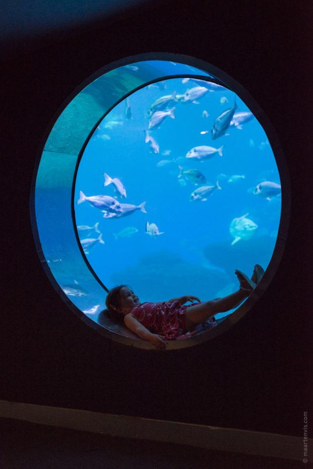 20170904 5647 620x929 - Palma Aquarium