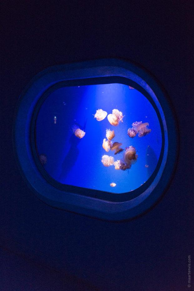 20170904 5670 620x929 - Palma Aquarium