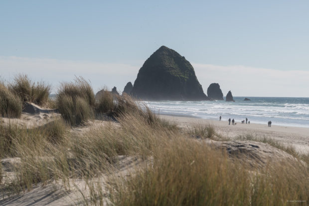 20180320 4338 620x413 - Chasing One-Eyed Willy in Cannon Beach