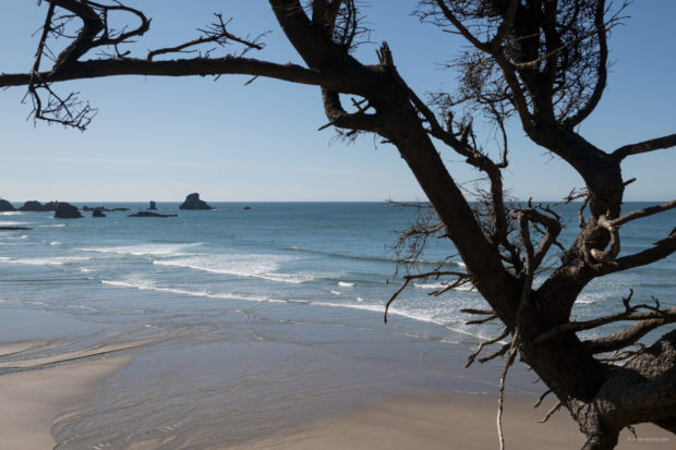 20180320 4549 620x413 - Hiking in Ecola State Park