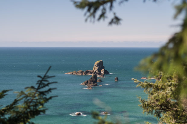 20180320 4605 620x413 - Hiking in Ecola State Park
