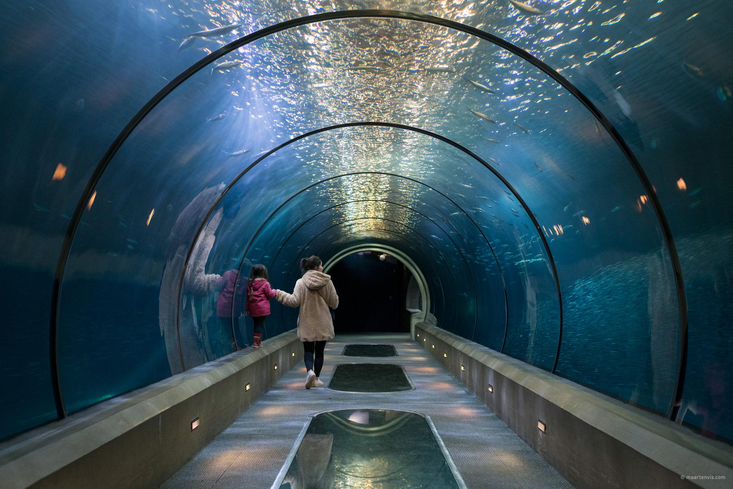 Newport And The Oregon Coast Aquarium